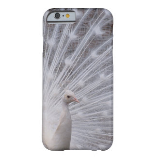 White Peacock Barely There iPhone 6 Case