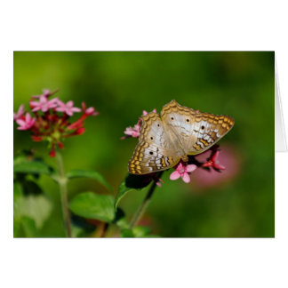 White Peacock Butterfly Note Card