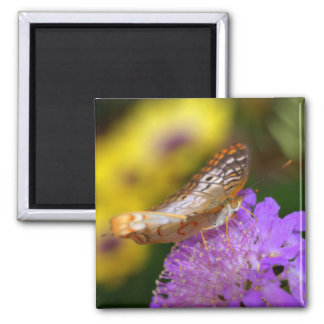 White peacock butterfly on purple bloom square magnet