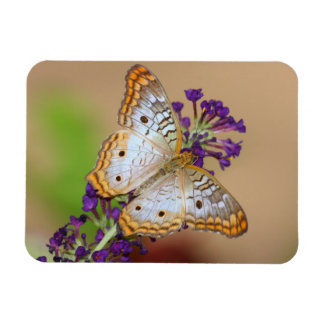White Peacock Butterfly on Purple Rectangular Photo Magnet