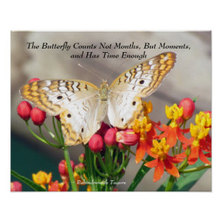 White Peacock Butterfly Quote Poster