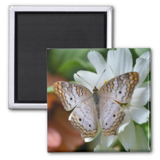 White Peacock Butterfly Square Magnet