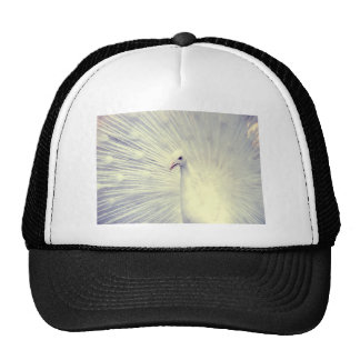 White Peacock Fine Art Photography Hat