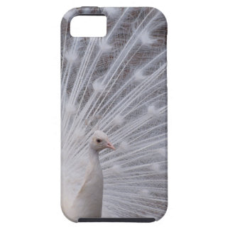 White Peacock iPhone 5 Cover