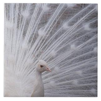 White Peacock Large Square Tile