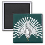 White Peacock Magnets