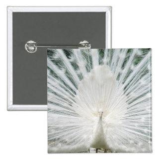 White Peacock Pins