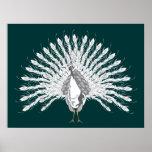 White Peacock Print