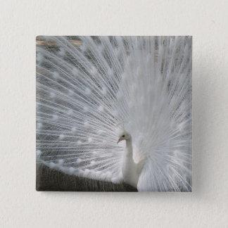 White Peacock Square Magnet 15 Cm Square Badge