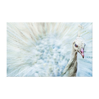 White Peacock With Open Wheel Portrait Canvas