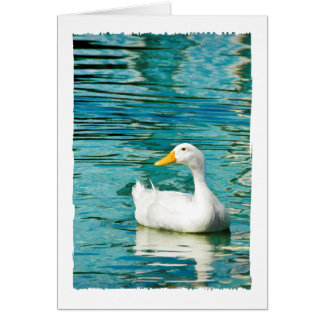 White Pekin Duck  - Nature Photo in Reflections Card