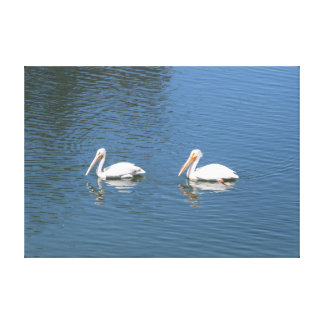 white pelican pair wrapped canvas canvas prints