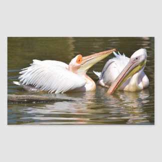 White pelicans on the water rectangle stickers