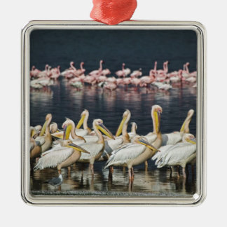 White Pelicans, Pelecanus onocrotalus, Lake Christmas Ornament
