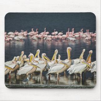 White Pelicans, Pelecanus onocrotalus, Lake Mouse Mat