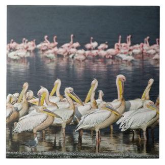 White Pelicans, Pelecanus onocrotalus, Lake Tile
