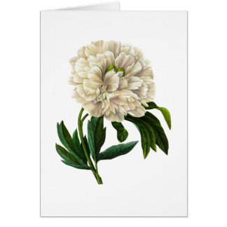 White Peony by Pierre-Joseph Redoute Card