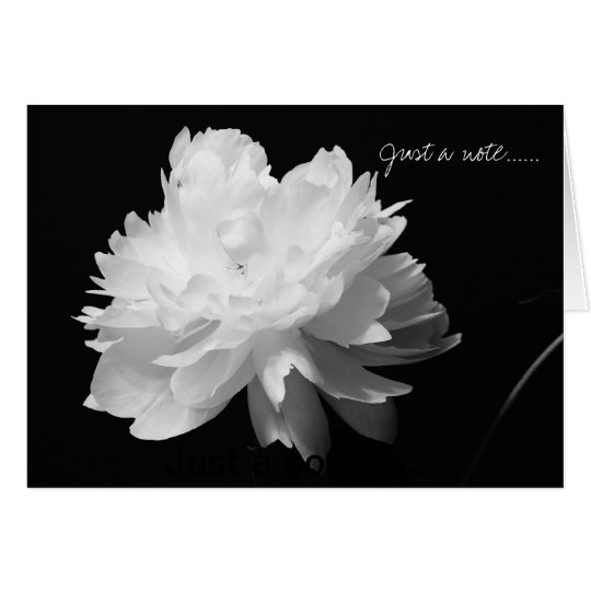 White Peony Note Card on Black