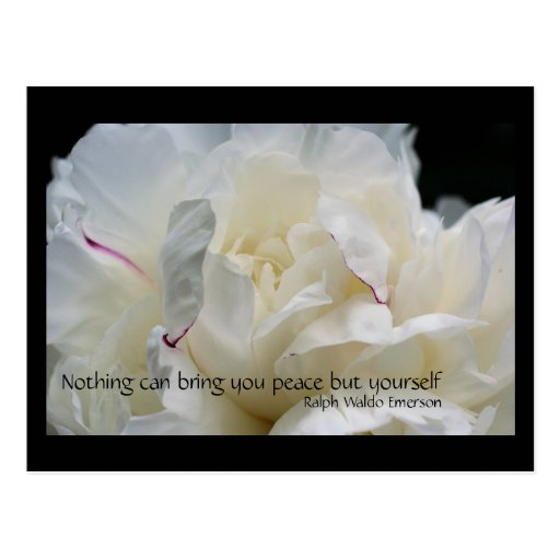 White Peony Peace Inspirational Quote Postcard