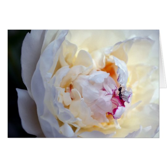 White Peony with Worker Ant Blank Card