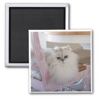 White Persian Cat on a Pink Chair Square Magnet