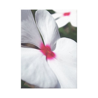 White Petals - Floral Illustration Gallery Wrapped Canvas