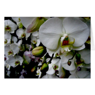 White Phalaenopsis Orchid Notecard
