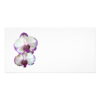 White Phalaenopsis Orchids With Purple Edges Photo Greeting Card