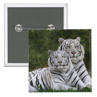 White phase, Bengal Tiger, Tigris 15 Cm Square Badge