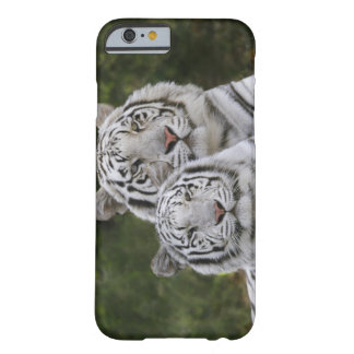 White phase, Bengal Tiger, Tigris Barely There iPhone 6 Case