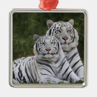 White phase, Bengal Tiger, Tigris Christmas Ornament