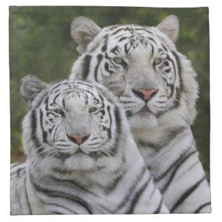 White phase, Bengal Tiger, Tigris Napkin