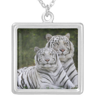 White phase, Bengal Tiger, Tigris Silver Plated Necklace