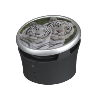 White phase, Bengal Tiger, Tigris Speaker