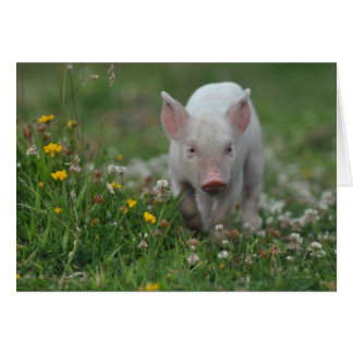 White Piglet in Field of Flowers Card