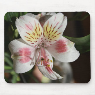 White/Pink Alstroemeria Mouse Pad