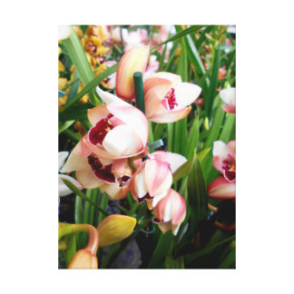 White Pinkish Cymbidium Orchids Canvas Print