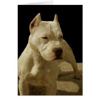 White pitbull greeting card