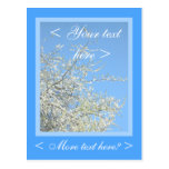 WHITE PLUM BLOSSOMS POST CARD
