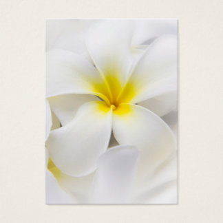 White Plumeria Flower Frangipani Floral Flowers Business Card