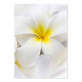 White Plumeria Flower Frangipani Floral Flowers Pack Of Chubby Business Cards