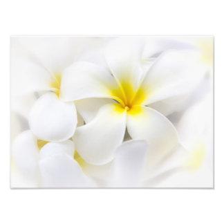 White Plumeria Flower Frangipani Floral Flowers Photographic Print
