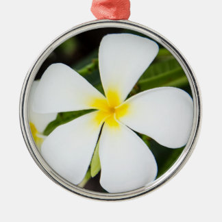 White Plumeria Flower - Frangipani Floral Template Christmas Ornament