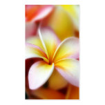 White Plumeria Frangipani Hawaii Flower Hawaiian Pack Of Standard Business Cards