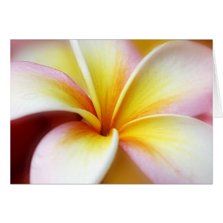 White Plumeria Frangipani Hawaii Flower Hawaiian Card