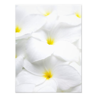 White Plumeria Frangipani Hawaiian Tropical Flower Photo Print