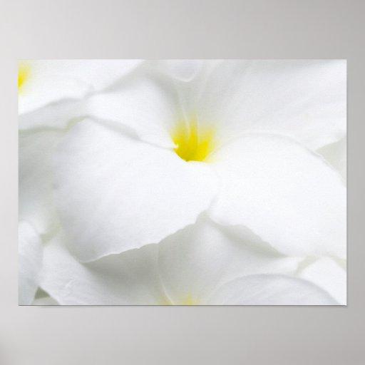 White Plumeria Frangipani Hawaiian Tropical Flower Print