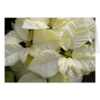 White Poinsettias Card