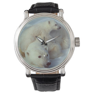 White Polar Bear Family Watch