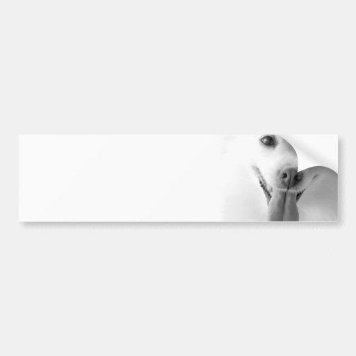 White Pomeranian Bumper Sticker